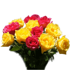 Bouquet of pink and yellow roses in Caldas