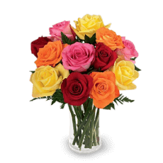RAINBOW Roses in El Oro (Gold)