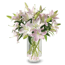 White lilies in Gracias a Dios (Thanks to God)