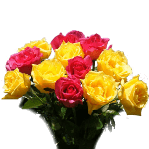 Bouquet of pink and yellow roses in Cesar