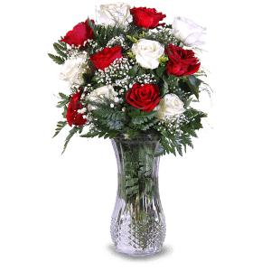 White and Red roses in Bonao (Monseñor Nouel)